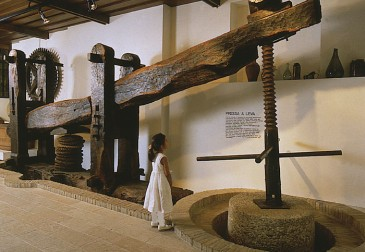 Museo dell'olio d'oliva